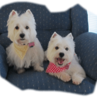 2-WESTIES-IN-A-CHAIR-copy-compressor