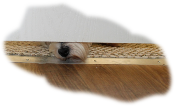 PIPERS NOSE UNDER THE DOOR