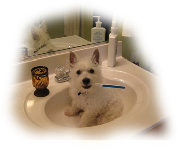 TOOTHBRUSH PUPPY
