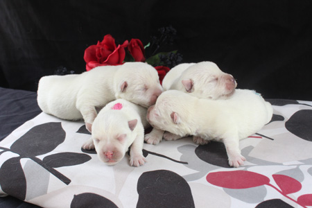 Blossom and Deacon's Litter – ALL SOLD