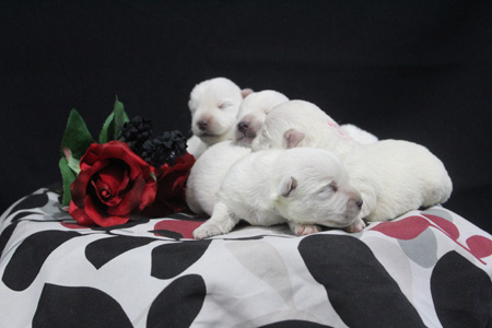 Artic and Yogi's Litter – ALL SOLD