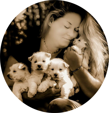 West Highland Terrier Puppies for Sale from Breeder | Arrowhead Acres