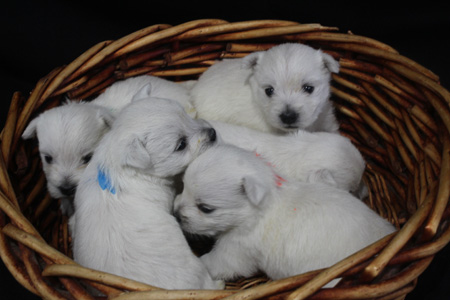 Fiona and Orville's Litter – ALL SOLD