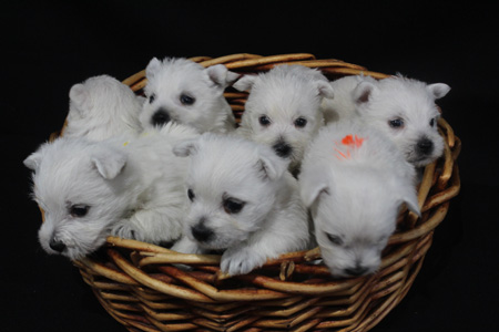 Magnolia and Barnabus' Litter – ALL SOLD