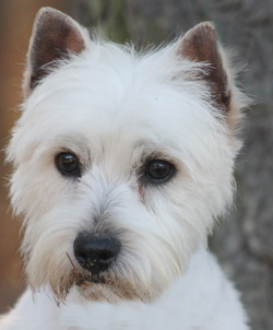 Pixie – Adopted