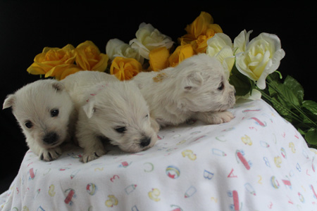 Pickles and Tonka's Litter – ALL SOLD