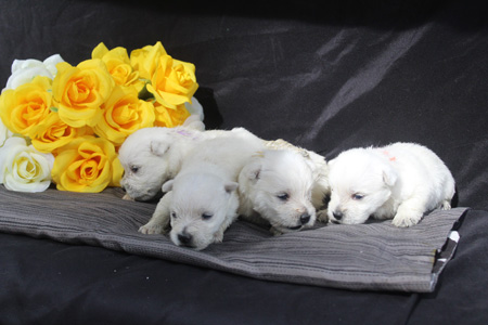 Cher and Tonka's Litter – ALL SOLD