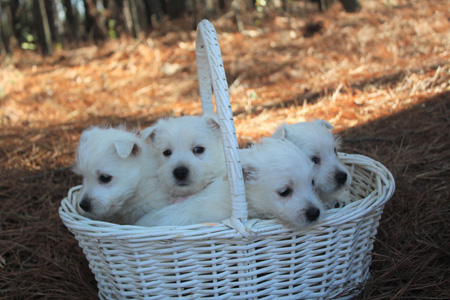 Petunia and Remy's Litter – ALL SOLD