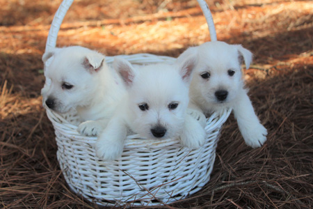 Rose and Dually's Litter