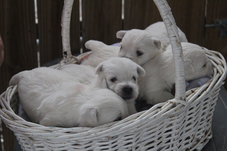 Sophie and Deacon's Litter