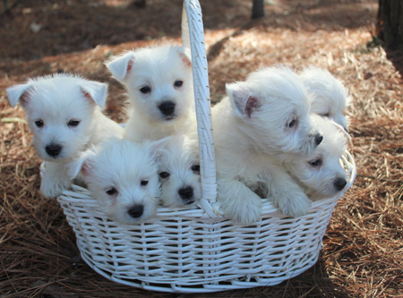 Trixie and Sonny's Litter