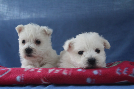 Gabby and Barnabus' Litter – ALL SOLD