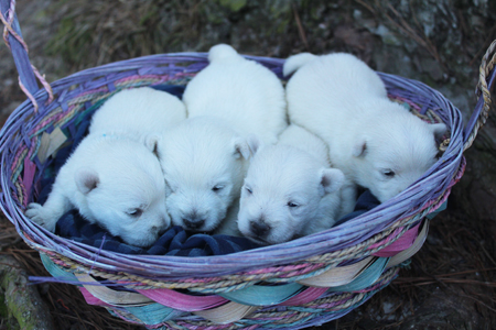 Jade and Dually's Litter