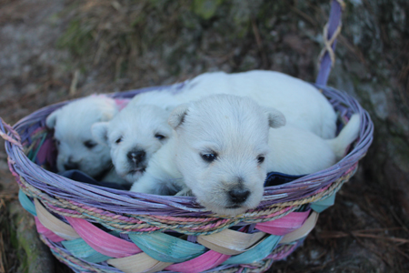 Legacy and Deacon's Litter