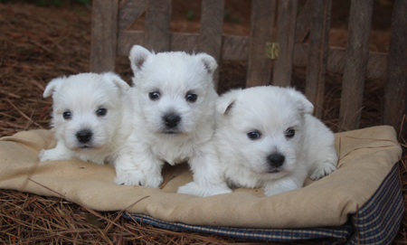 Charity and Remy's Litter