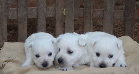 Crystal and Dually's Litter
