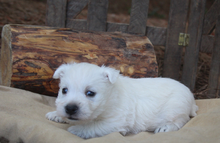 Fiona and Tonka's Litter – ALL SOLD