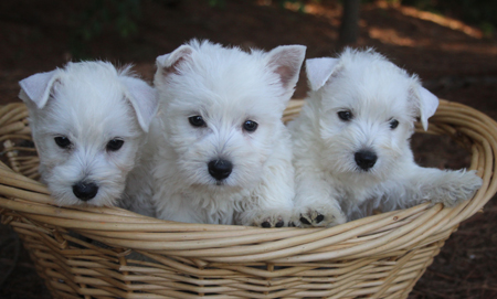 Arctic and Yogi's Litter – ALL SOLD
