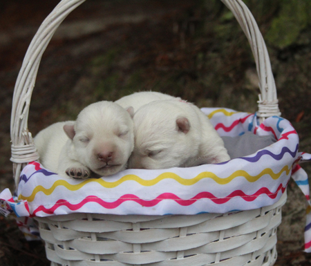 Elsa and Deacon's Litter – ALL SOLD