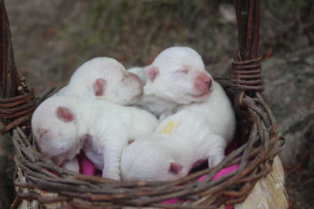 Minnie and Jackson's Litter
