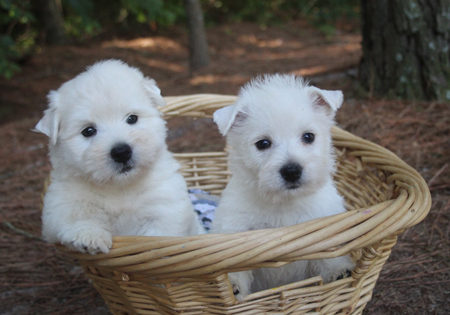 Peonie and Remy's Litter – ALL SOLD