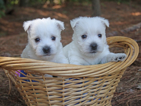 Pickles and Deacon's Litter – ALL SOLD