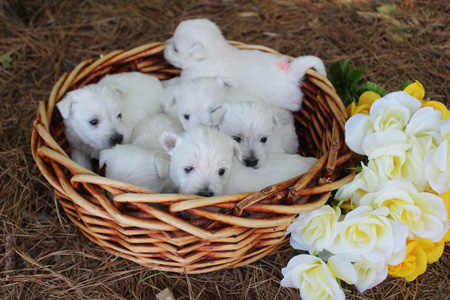 Cupcake and Deacon's Litter – ALL SOLD