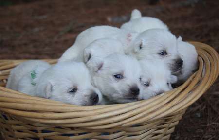 Tina and Dually's Litter – ALL SOLD