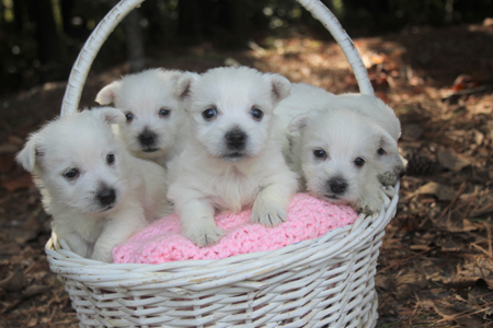 Olive and Dually's Litter – ALL SOLD