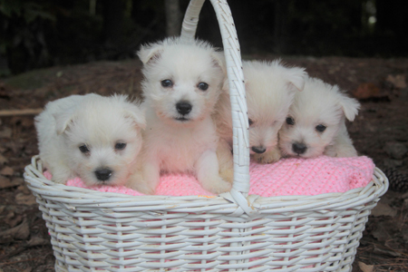 P-Nut and Tonka's Litter – ALL SOLD
