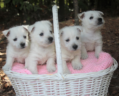 Pebbles and Ike's Litter – ALL SOLD