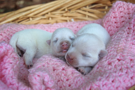 Diamond and Sonny's Litter – ALL SOLD
