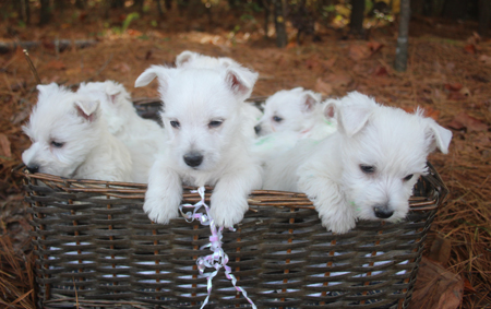 Legacy and Deacon's Litter – ALL SOLD