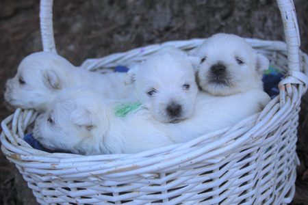 Popcorn and Remy's Litter – ALL SOLD