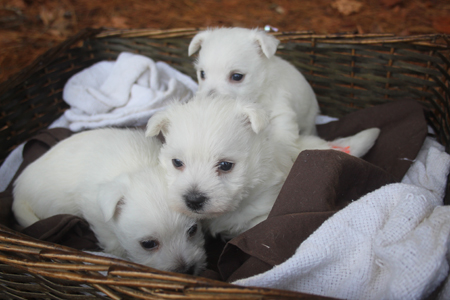 Jade and Dually's Litter – ALL SOLD