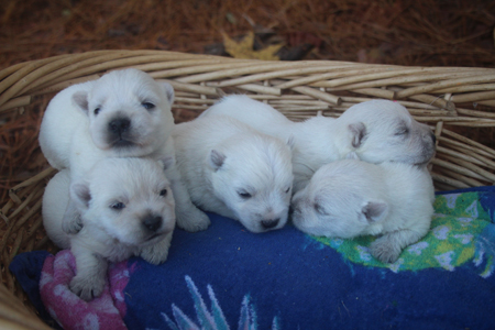 Iris and Jackson's Litter – ALL SOLD