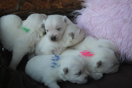 Miracle and Popeye's Litter – ALL SOLD