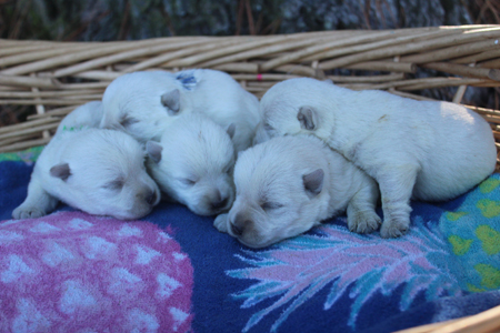 Blossom and Deacon's Litter