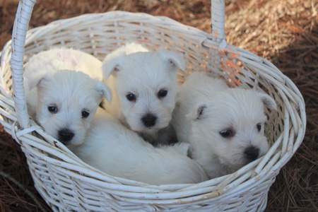 Fancy and Barnabus' Litter