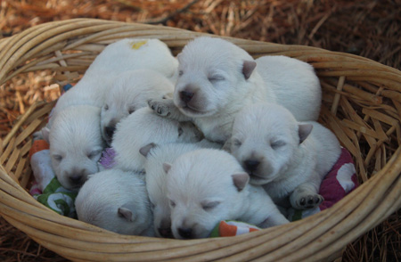 Linzy and Deacon's Litter