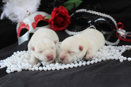 Sparrow and Popeye's Litter – ALL SOLD