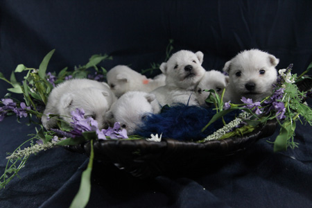 Miracle and Wilbur's Litter – ALL SOLD