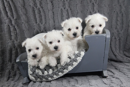 Yahtzee and Deacon's Litter – ALL SOLD