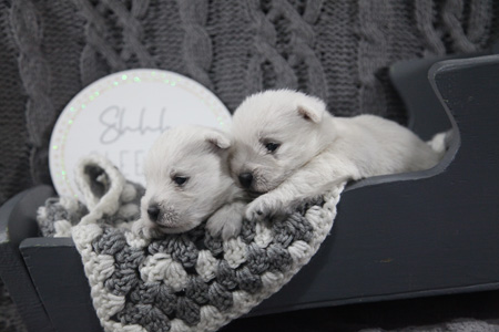 BG and Barnabas' Litter – ALL SOLD
