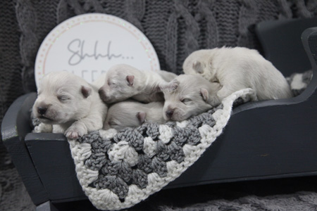 Charity and Remy's Litter – ALL SOLD
