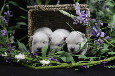 Gabby and Barnabas' Litter – ALL SOLD