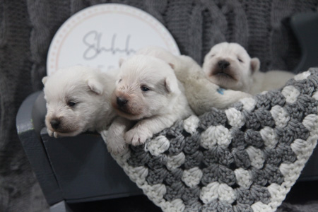 Rose and Dually's Litter – ALL SOLD
