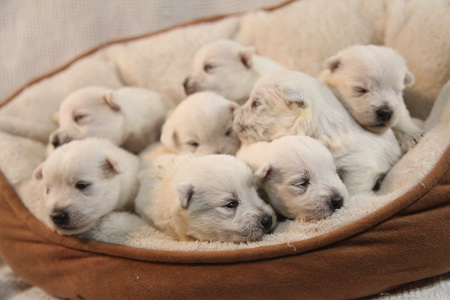 Cupcake & Dually's Litter – ALL SOLD
