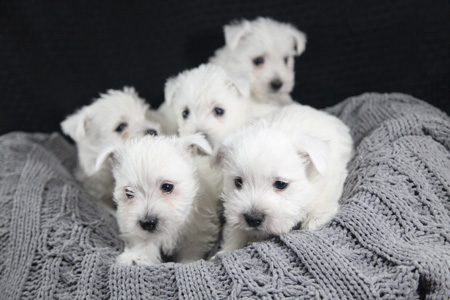 Fancy and Wilbur's Litter – ALL SOLD
